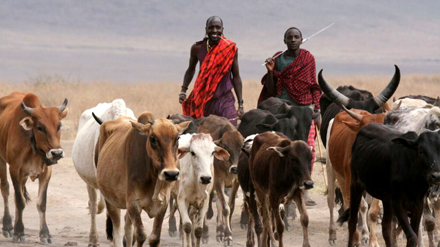 Crop Livestock Protection – Featured Image