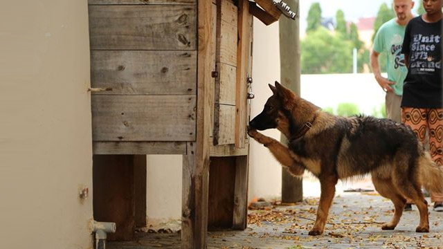 Dog Training - Featured Image