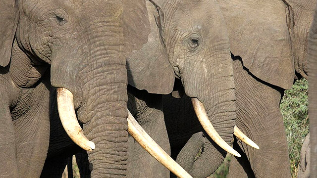 PAMS Tanzania Elephant Project - Featured Image
