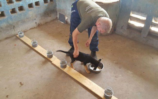 Detection Dog Training Image 02