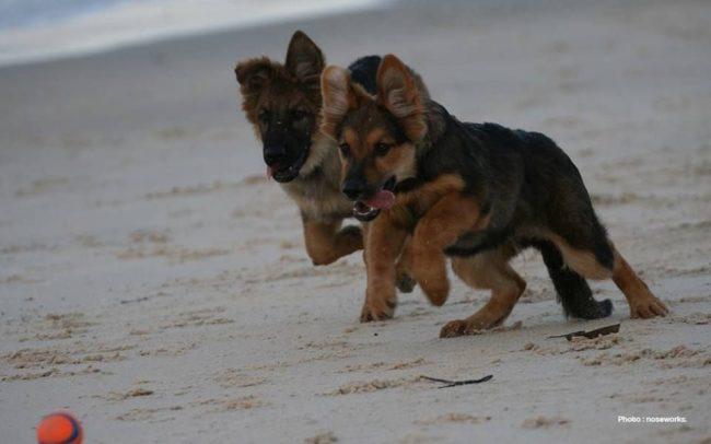 Detection Dog Training Image 03
