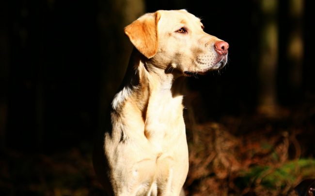 Detection Dog Training Image 04