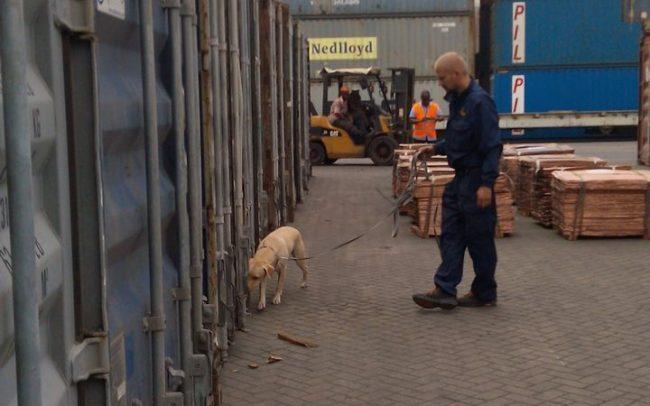 Detection Dog Training Image 06