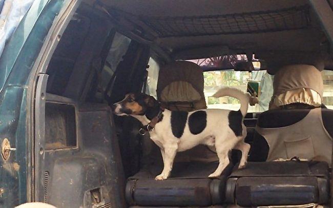 Detection Dog Training Image 07