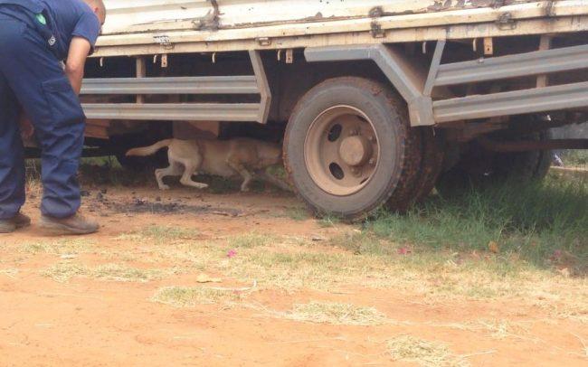 Detection Dog Training Image 08
