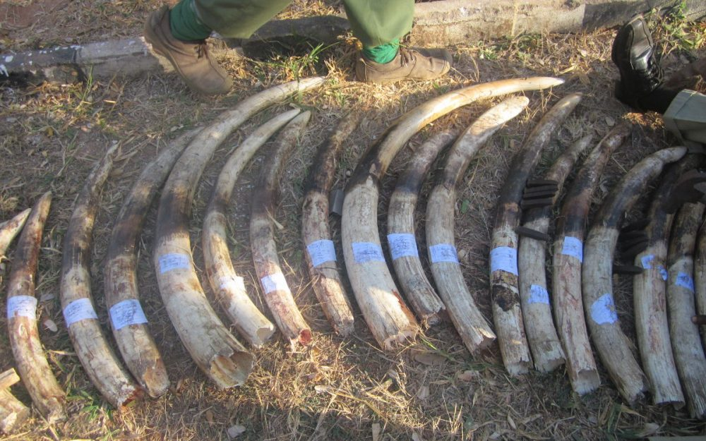 ICUN Anti-Poaching Image 02