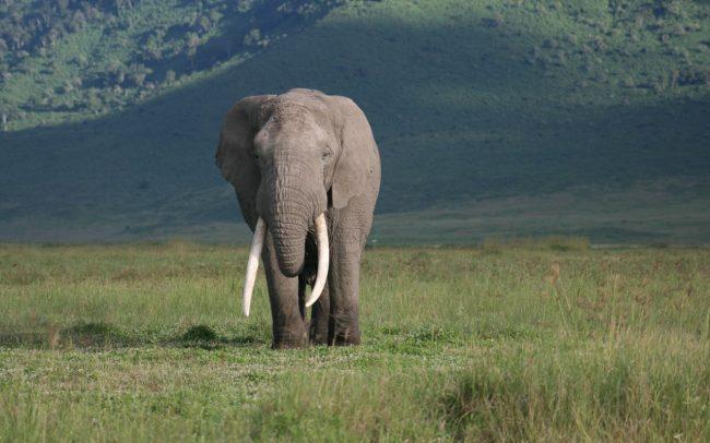 PAMS Tanzania Elephant Project Image 01