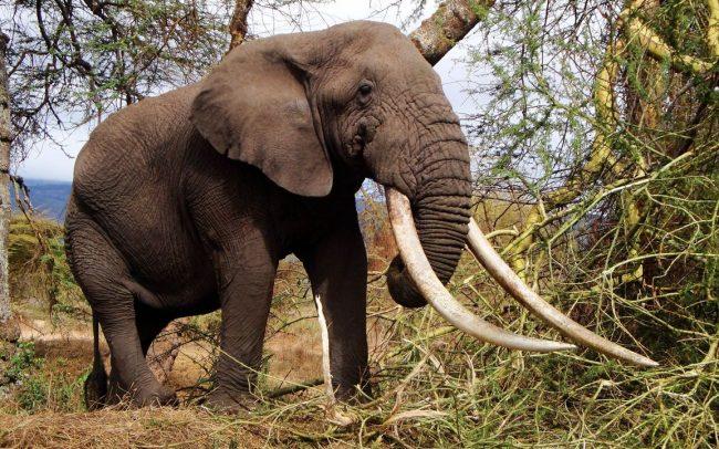 PAMS Tanzania Elephant Project Image 02