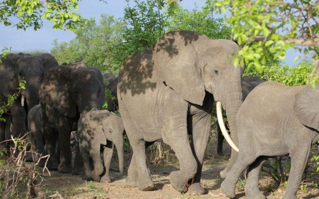 PAMS Tanzania Elephant Project Image 04