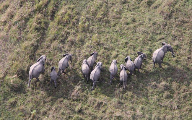 PAMS Tanzania Elephant Project Image 05