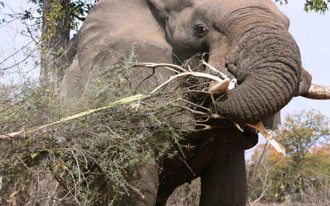 PAMS Tanzania Elephant Project Image 06
