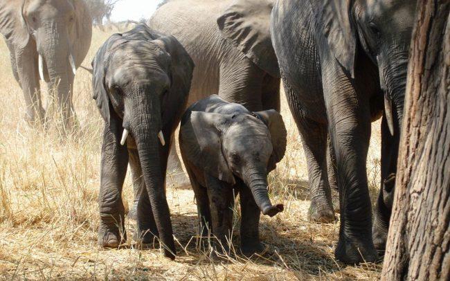 PAMS Tanzania Elephant Project Image 07