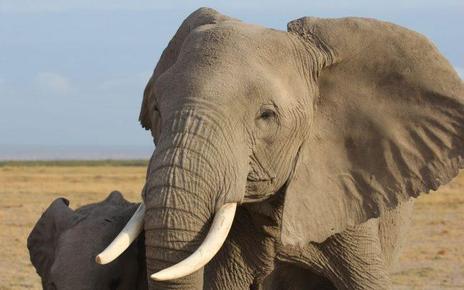 PAMS Tanzania Elephant Project Image 08