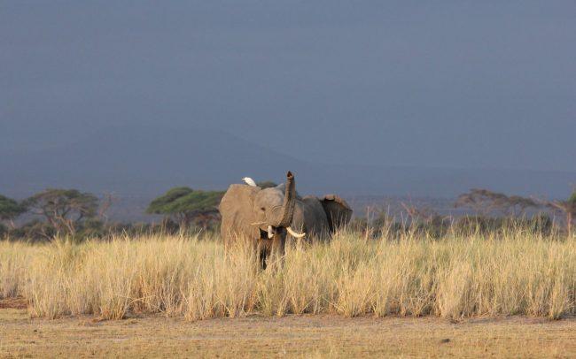 PAMS Tanzania Elephant Project Image 09
