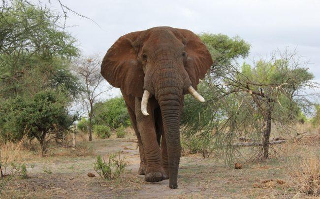 PAMS Tanzania Elephant Project Image 10