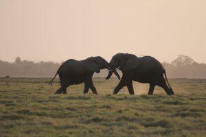 PAMS Tanzania Elephant Project Image 11
