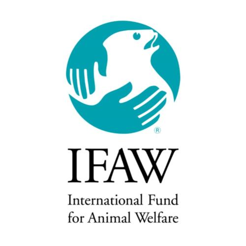 Pams foundation support IFAW
